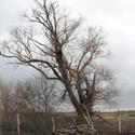Наше огромное дерево
