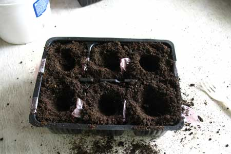 Подготовка кассеты с землей для пересадки рассады