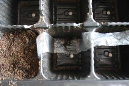 Подготовка кассеты для пересадки рассады