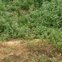 Определяем кислотность почвы