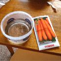 Замачивание семян моркови
