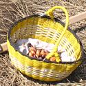 Посадка лука репчатого севком