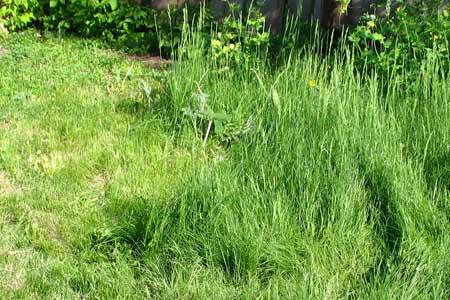 Трава выросла