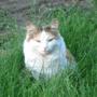 Кошка в деревне