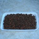 Кедровые орехи для посадки
