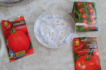Как замочить семена для рассады 135
