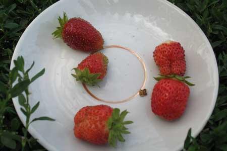 Первые ягоды ремонтантной клубники