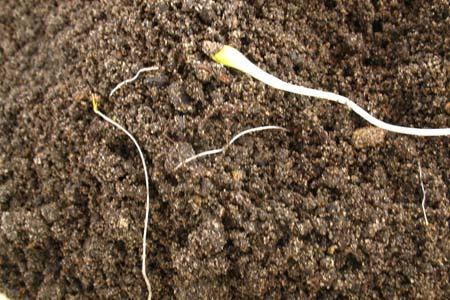 Проросшие в почве сорняки