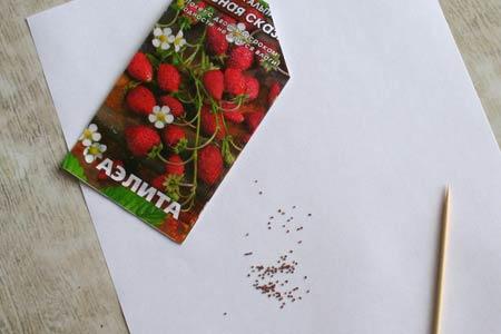 Семена земляники ремонтантной